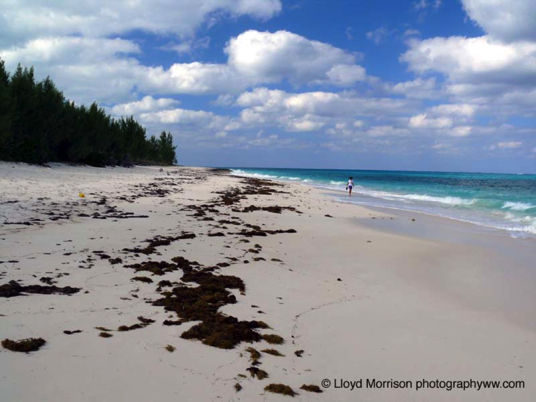 Abaco Bost Beach View