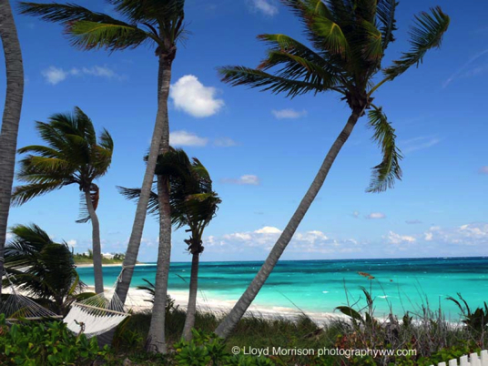 Rental Cottages - Lubbers and Tilloo Cay - Rental Villas, Search