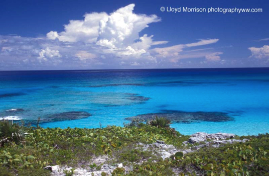 http://www.adventuretravelww.com/Bahamas/ExumaCays2_files/Coral%20reef%20and%20warm%20water%20in%20the%20Bahamas.jpg