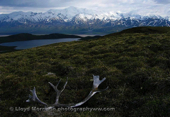 Wrangell St Elias National Park